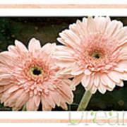 Gerber Daisy Dream 5 Poster