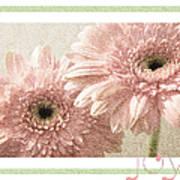 Gerber Daisy Joy 3 Poster
