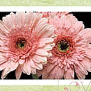 Gerber Daisy Love 4 Poster