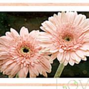Gerber Daisy Love 5 Poster