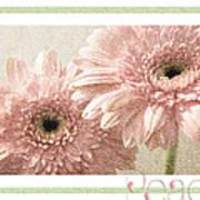 Gerber Daisy Peace 3 Poster