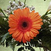 Gerbera Daisy Poster by Jeff Kolker