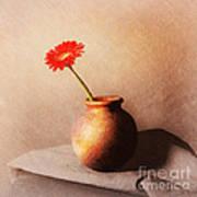 Gerbera In Stone Vase Poster