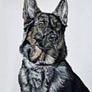 German Shepherd Bodhi Poster