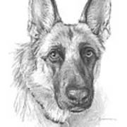 German Shepherd Face Pencil Portrait Poster