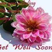 Get Well Soon - Louise Dahlia - Pink Flower Poster