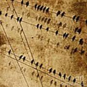 Ghost Birds On A Wire Poster by Deborah Talbot - Kostisin