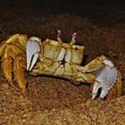 Ghost Crab 6 11/01 Poster
