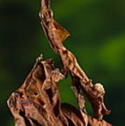 Ghost Or Dead Leaf Mantis Poster