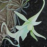 Ghost Orchid On A Palm Tree Poster
