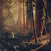 Giant Redwood Trees Of California Poster