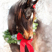Gift Horse Poster by Sari ONeal