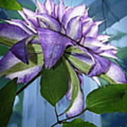 Gift Of Clematis Poster