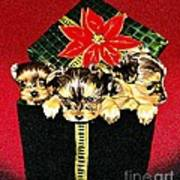 Gift Puppies Poster by Judy Skaltsounis