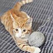 Ginger Cat With Yarn Ball Poster