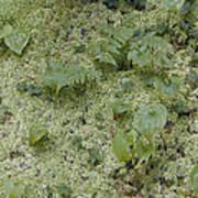 Ginger Moss Carpet Poster
