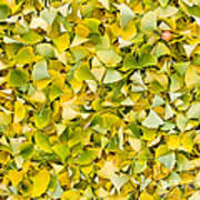 Ginkgo 2 Poster