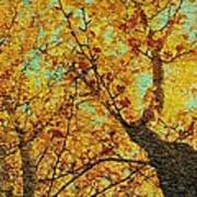 Ginkgo Tree  Poster