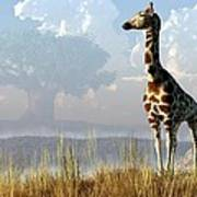 Giraffe And Giant Baobab Poster