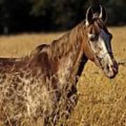 Giraffe Horse Poster