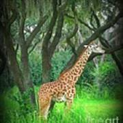Giraffe In Florida Poster