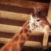 Giraffe Smarty Poster