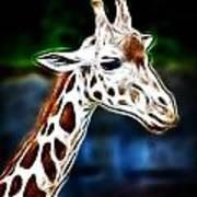 Giraffe Zoo Art Poster