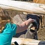 Girl Pets Donkey Poster