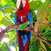 Gizmo the Macaw Poster