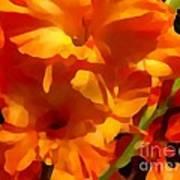 Gladiola Coral Poster