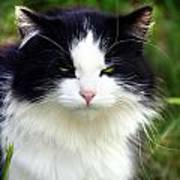 Glaring Cat Poster
