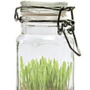 Glass Jar Poster