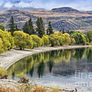 Glendhu Bay Lake Wanaka With Autumnal Trees Poster