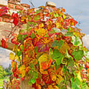 Glorious Autumn Leaves Poster