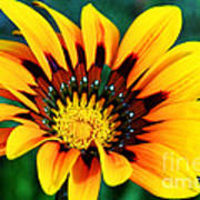 Glorious Day Yellow Flower By Diana Sainz Poster