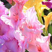 Glorious Summer Gladiolus Poster