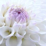 Glowing Dahlia Flower Poster