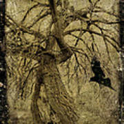 Gnarled And Twisted Tree With Crow Poster