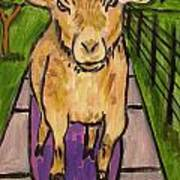 Goat Skateboarding Poster by Jay  Schmetz