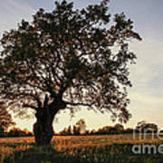 Goddess Tree 2 Poster