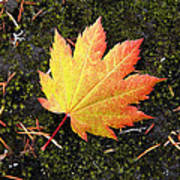God's Perfect Leaf Poster