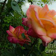 God's Roses Poster