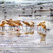 Godwits At San Elijo Beach Poster