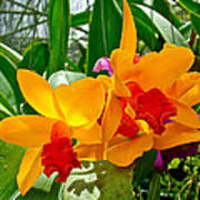 Gold And Red Orchids At Maerim Orchid Farm In Chiang Mai-thailan Poster