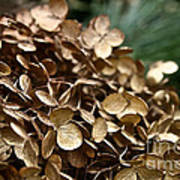 Gold Hydrangea Poster