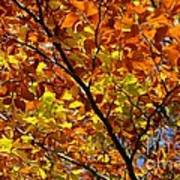 Gold Leaves Of Autumn Poster
