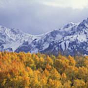 Golden Aspens With Mt. Sneffels Poster