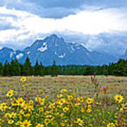 Golden Asters And Tetons From The Road In Grand Teton National Park-wyoming Poster