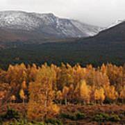 Golden Autumn - Cairngorm Mountains Poster