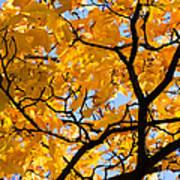 Golden Autumn - Featured 3 Poster